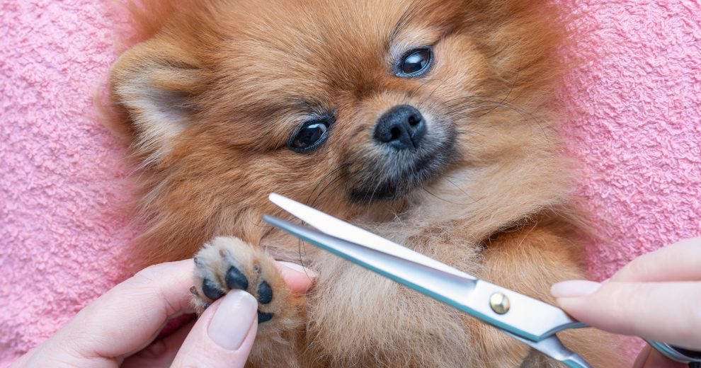 This Grooming Kit Has Everything You Need to Give Your Dog a Salon Treatment at Home