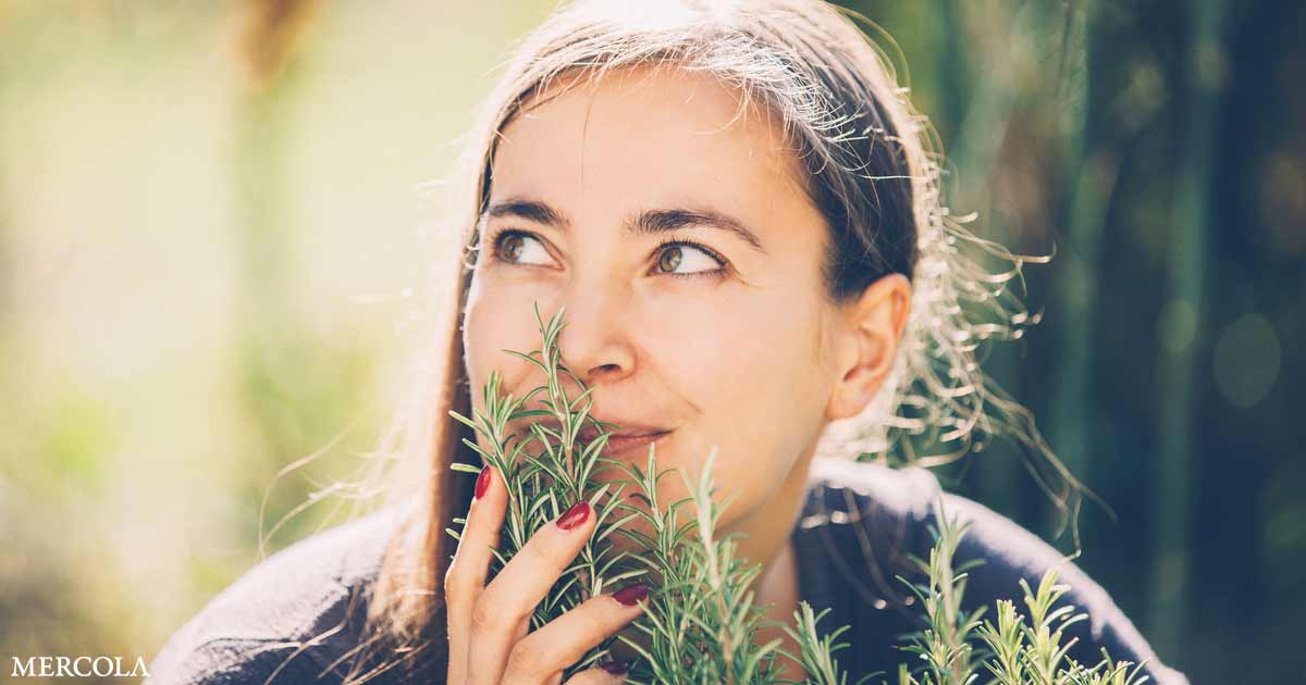 Can Rosemary Enhance Cognitive Perform?
