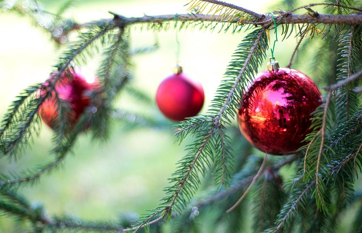 Four Methods to Have the Greenest Christmas Tree