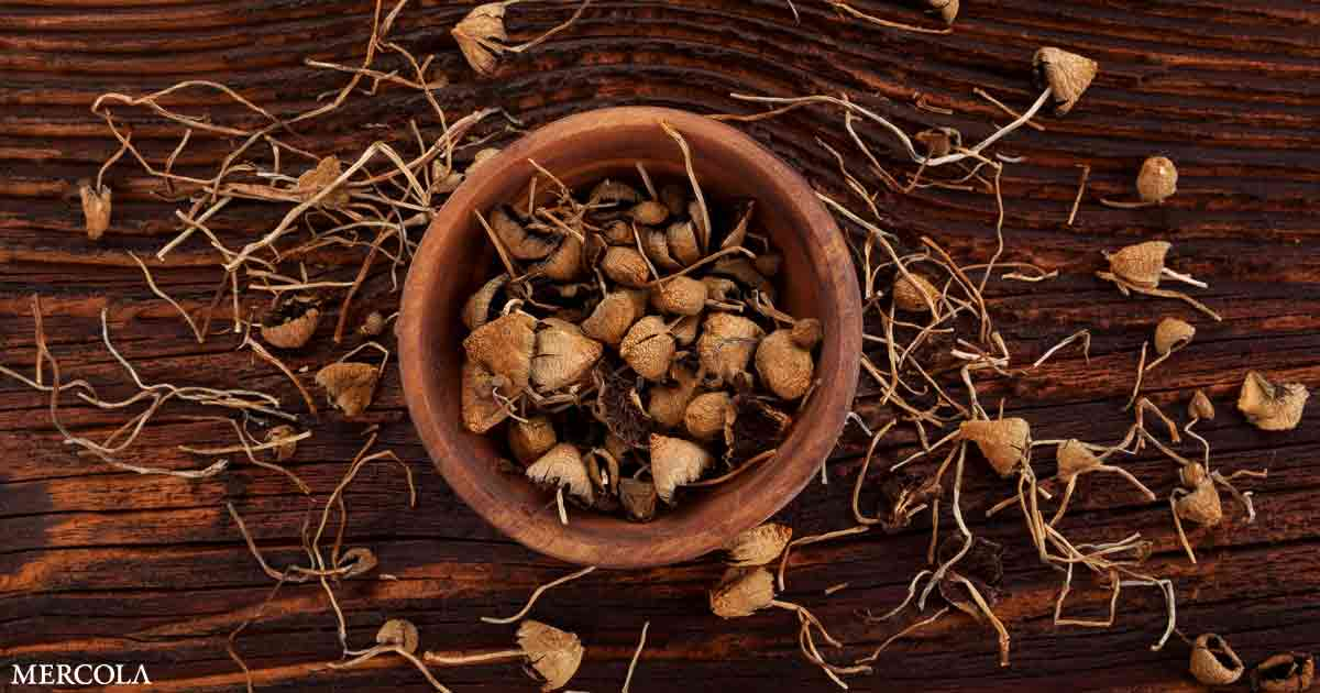 More Evidence Supports Benefits of Medicinal Mushrooms