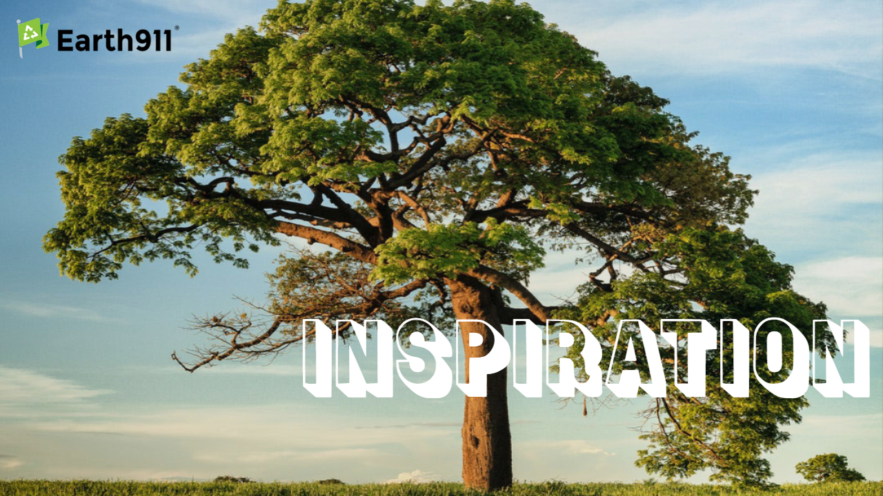 Earth911 Inspiration: Each Inexperienced Tree — Martin Luther King Jr