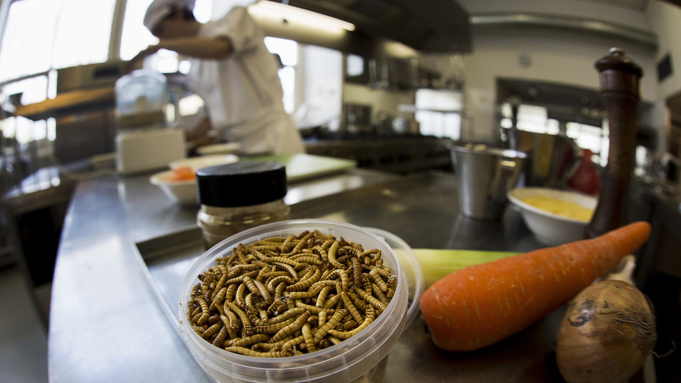 'High protein content': Insects set to crawl their way onto Europeans' plates as EU regulator rules MEALWORMS are SAFE to eat