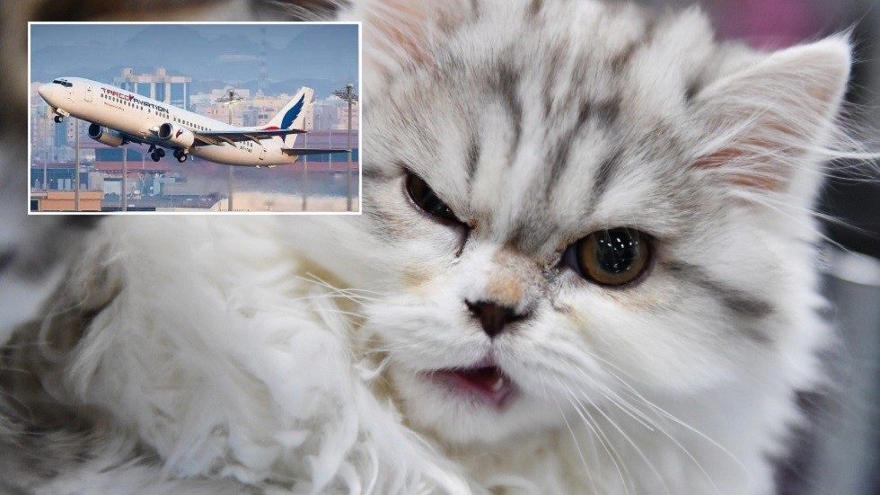 Aircraft pressured to land in Sudan after CAT ATTACKS pilot mid-air, 'hijacking' cockpit