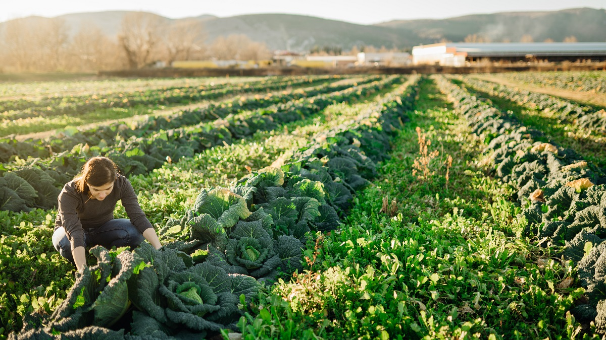 Is Biodynamic Higher Than Natural?